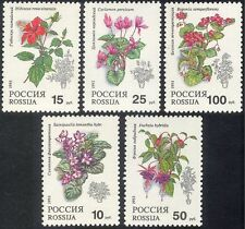 Russia 1993 Fuchsia/Violet/Begonia/Pot Plants/Flowers/Nature 5v set (n17806)
