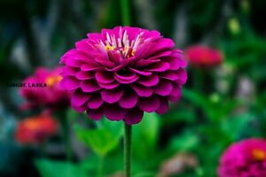 Picture Of Flowers Natural Photo Image Landscape Photograph HD Images