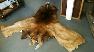 ELK CAPE, TANNED, NICE, antlers, hide, small animals
