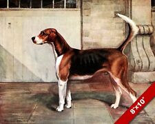 English Foxhound Belvoir Dexter Pet Puppy Dog Art Painting Print On Real Canvas