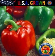 Keystone Resistant Bell Pepper Seeds 100 Seeds Non-Gmo Green Peppers