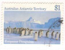 AAT 1985 Emperor Penguin (Aptenodytes forsteri)1
