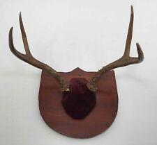 Deer Antlers Mounted Plaque Rack Taxidermy Wall Mantel Rustic Hunting Display