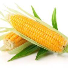 BULK 100 Packs Seeds Corn Delicacy Sugar Sweet Giant Vegetable Organic Ukraine