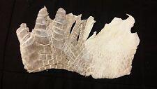 Genuine FL Alligator Skin natural color REAL gator hide alligator hide skin M69
