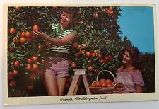 Vintage Color Unused Postcard - Oranges, Florida's Golden Fruit