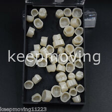 Dental Temporary Crowns Posteriors Molar Resin Tooth Teeth Polycarbonate Caps