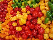 Habanero Hot Chili Pepper Seeds Color Blend 50 PCS