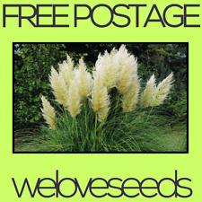 LOCAL AUSSIE STOCK - Rare Yellow Pampas, Ornamental Grass Seeds ~10x FREE SHIP