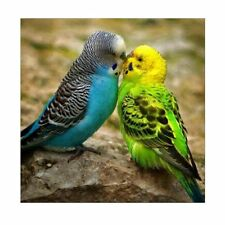 Two Birds DIY 5D Diamond Painting Embroidery Cross Stitch Kit Home Decor Crafts