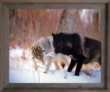 Wild Black and Gray Wolf Wildlife Animal Wall Decor Barnwood Art Framed Picture
