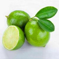 20PCS Thai Organic Key Lime Aurantifolia Seeds Citrus Lemon Seeds Fruit Seeds