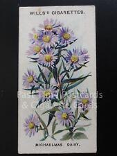 Single: MICHAELMAS DIASY No.34 OLD ENGLISH GARDEN FLOWERS - Wills Ltd 1910