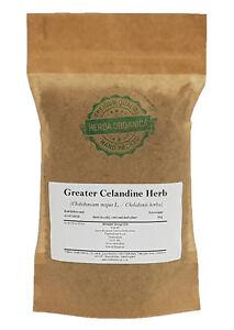Greater Celandine Herb - Chelidonium Majus L # Herba Organica # nipplewort
