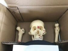 Mr Thrifty Human Skeleton Anatomical Model with Painted and Numbered Muscles