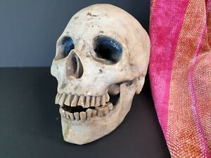 Old Cast Skull …beautiful display piece