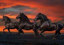 RIESEN Poster PFERDE - Red Sky Horses By Bob Langrish - Quer ca140x100 NEU FL567