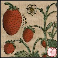 German Botany Books - 16th c. Kreuterbuch - H. Bock - Fuchs - Brunfels - 3 DVD's