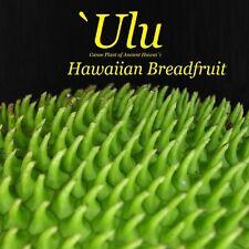 ~ULU~ BREADFRUIT Artocarpus Ancient HAWAIIAN Canoe Plant 12-18+inch potted plant