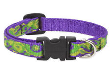 "Lupine Dog Collar 1/2"" BIG EASY 6""-9"" Purple Green Lime New Orleans LA USA New"