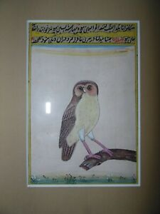 Indian Mughal Gouache Painting, Portrait of an Owl.