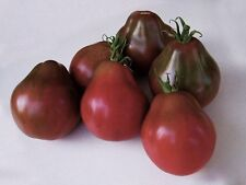 30 BLACK TRUFFLE TOMATO 2021 (all non-gmo heirloom vegetable seeds!)