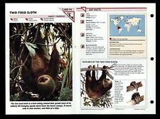 """""""TWO-TOED SLOTH"""" WILD LIFE FACT FILE ANIMAL CARD/HOME SCHOOL STUDY"""