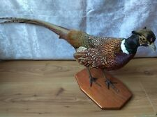 Vintage Taxidermy hunting Pheasant bird taxidermie