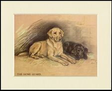 LABRADOR RETRIEVER DOGS THE HOME GUARD LOVELY DOG PRINT MOUNTED READY TO FRAME