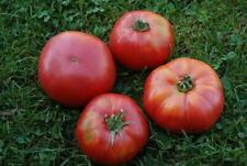 15 Graines/Seeds Tomate Rouge Ancienne - Variété : Géante Orenbourg - BIO