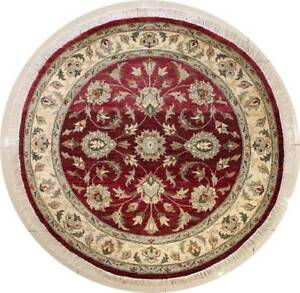 Rugstc 6x6 Senneh Chobi Ziegler Red Area Rug,Natural dye, Hand-Knotted,Wool Pile