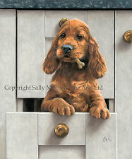 Irish Setter Ltd Edition Print by Paul Doyle -