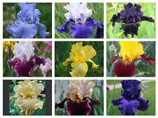 New listing 15 mixed bearded iris rhizomes - Shipping Now - lot