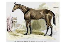 TIM WHIFFLER 1867 MELBOURNE CUP Winner modern Digital Art Postcard