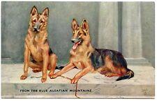 OILETTE. PORTRAIT DE CHIENS . BERGERS ALLEMANDS.  DOGS.