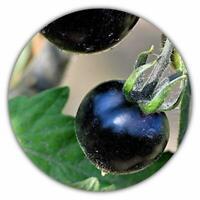 Seltene schwarze Tomate - 50 Samen