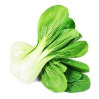 Cabbage Pak Cho/Bok Choy Non GMO Heirloom Asian Vegetable Seeds Sow No GMO® USA