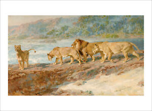 Riviere - On the Banks of an African River lions fine art print various sizes