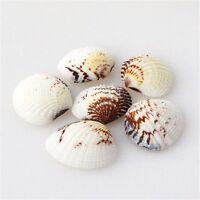 20 pcs Mixed Natural Sea Shells Beads Clams Shells Craft Decor Beach Wedding