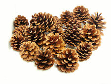 250g Pack Natural Pine Cones 5 - 8cm (approx 12 - 20 Pine Cones) TOP QUALITY