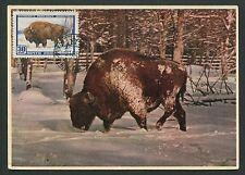 RUSSIA MK 1960 FAUNA BISON WISENT MAXIMUMKARTE CARTE MAXIMUM CARD MC CM d5868