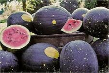 Heirloom MOON & STARS WATERMELON Red Flesh❋25 SEEDS❋25-40 lb Melons COMBINE S/H*