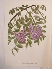 Set of 12 Vintage MARY WALCOTT Botanical Wildflower Art Prints WISTERIA, Purples