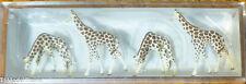 Preiser N #79715 Animals -- Giraffes