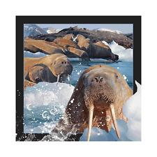 Worth Keeping 3D Lenticular Post Card - Walrus - Wk-Pc-048
