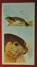 MONK SEAL   Superb Unmounted Colour Card