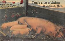 THERE'S A LOT OF SUCKERS IN JACKSON MICHIGAN PIGS NURSING POSTCARD 1913