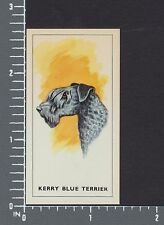 Kerry Blue Terrier dog Dogs Heads by G.P. Tea card #2