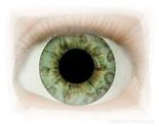REBORN DOLL Half Round 26mm Real Eyes Ocean Green ~ REBORN DOLL SUPPLIES