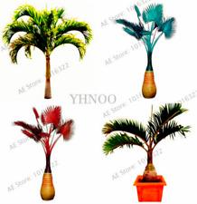 10 PCS Seeds Bottle Palm Tree Plants Bonsai Tropical Ornamental Home Garden 2020